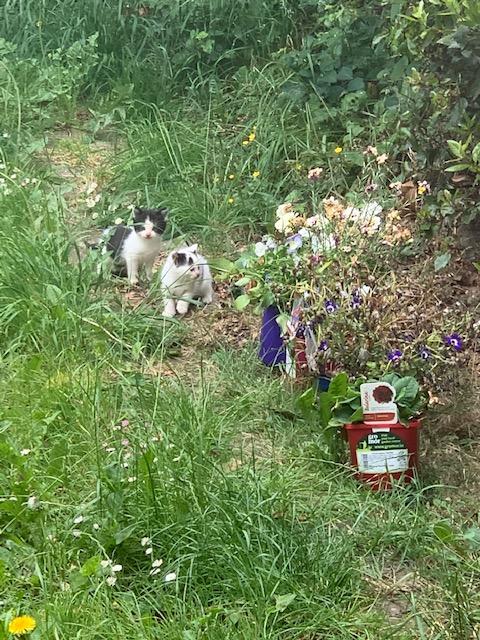 Dice in the Garden